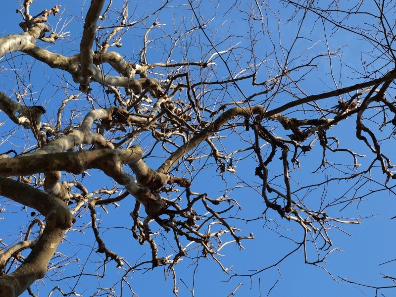 Arbre, printemps precoce-jardin des plantes Arbre10