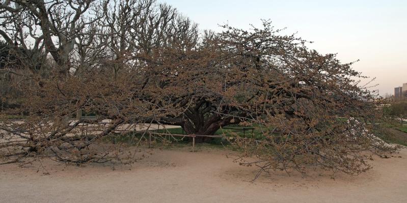 Arbre, printemps precoce-jardin des plantes Etala10