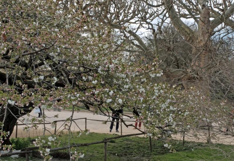 Arbre, printemps precoce-jardin des plantes F210