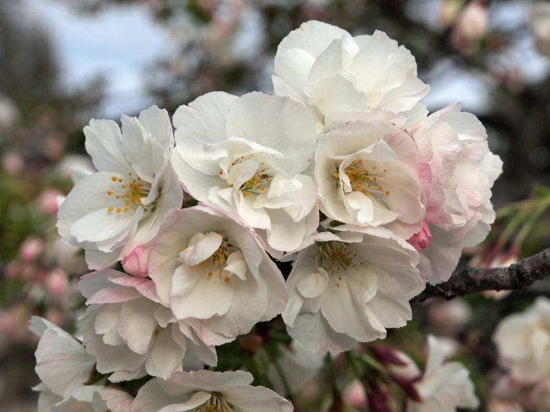 Arbre, printemps precoce-jardin des plantes F410