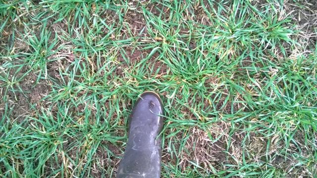 Blé en SD sur prairies: suivi des parcelles - Page 2 Wp_20110