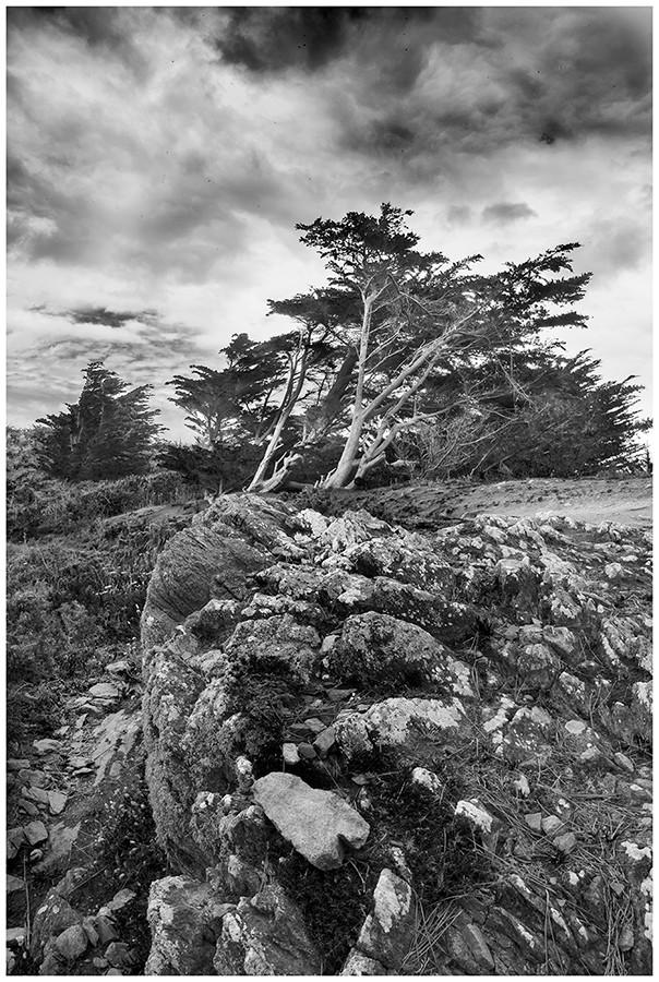 L'arbre tourmenté  Flikr-12