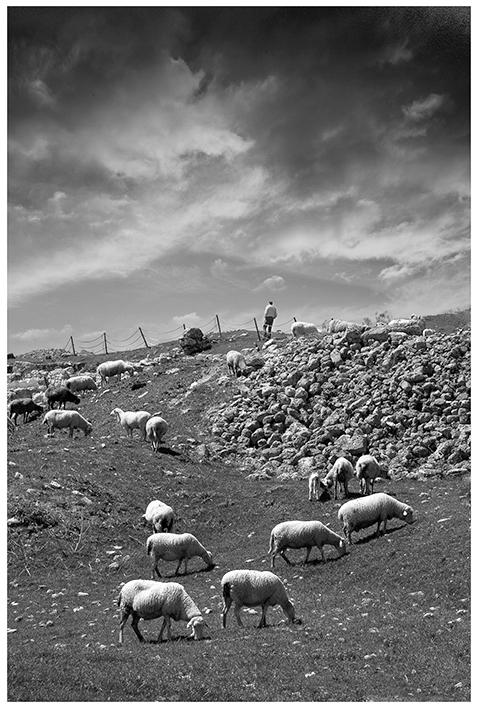 Le Berger et ses moutons Le-ber10