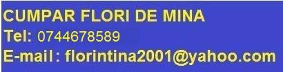 www.traforaj.ro