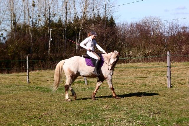"""Mettre un cheval """"a l'endroit"""" et travailler son équilibre. Sam_3610"""
