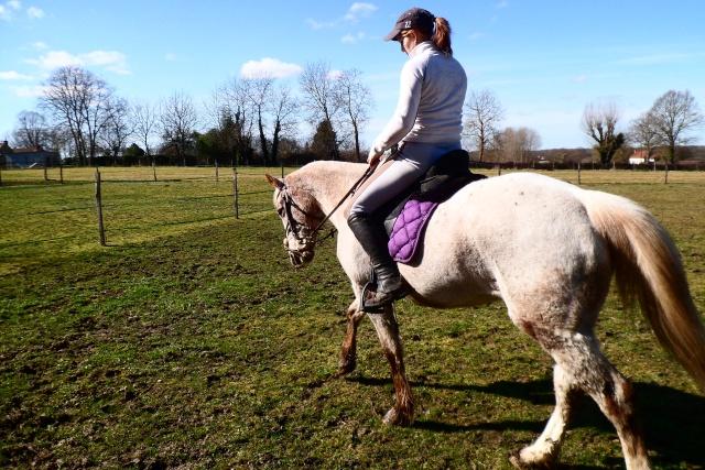 """Mettre un cheval """"a l'endroit"""" et travailler son équilibre. Sam_3611"""