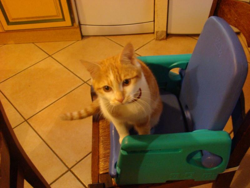 Donne jeune chatte Dsc07310