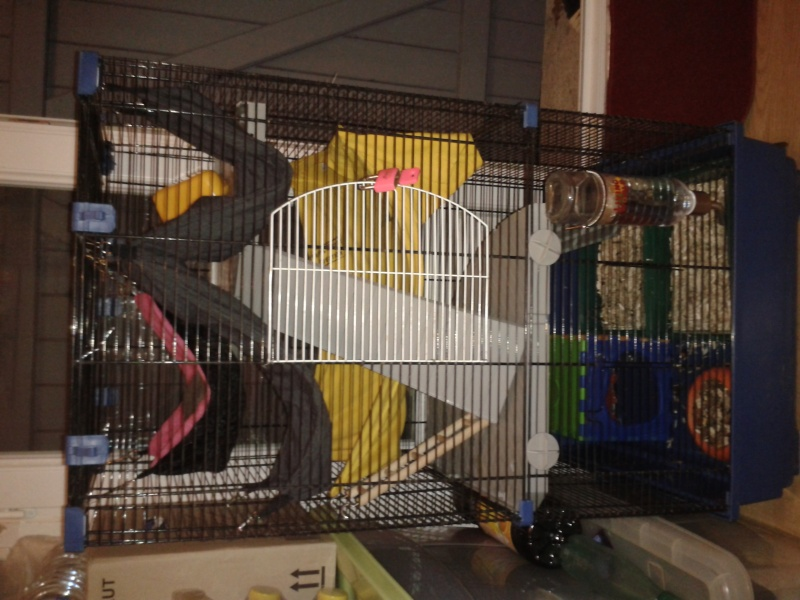Grande cage (44/49/85) 2013-128