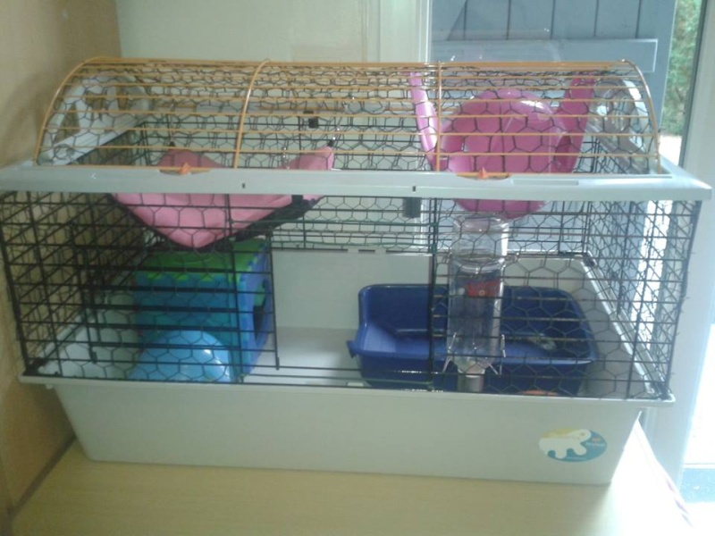 Vend cage rat/lapin/chon'  30€ Cage10