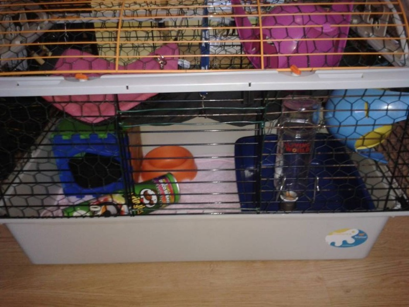 Vend cage rat/lapin/chon'  30€ Cage210