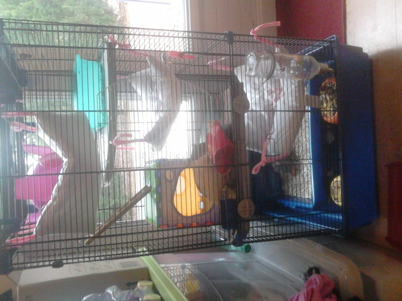 Grande cage (44/49/85) Dsc_0012