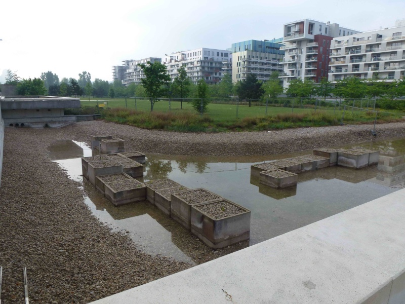 Bassin du Parc de Billancourt - Page 2 P1190121