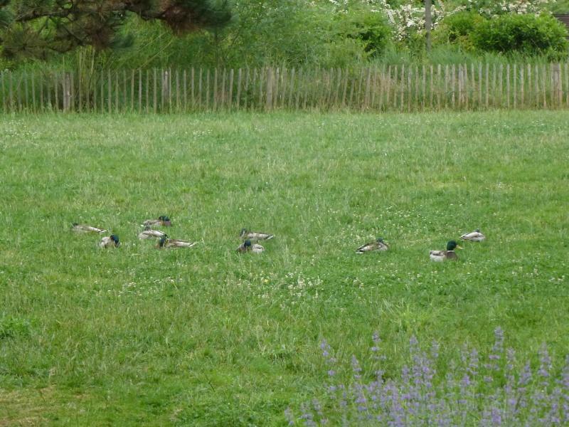 Bassin du Parc de Billancourt - Page 2 P1200225