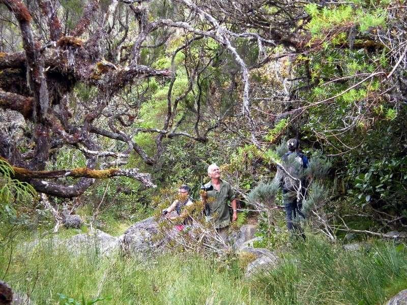 Troisième voyage à la Réunion 15_bra11