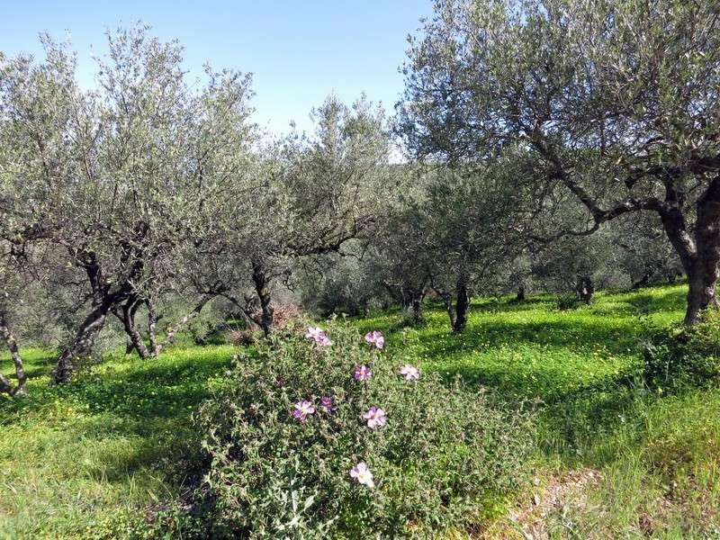 Le centre de la Crète du 3 au 6 avril 2014 1_lith10