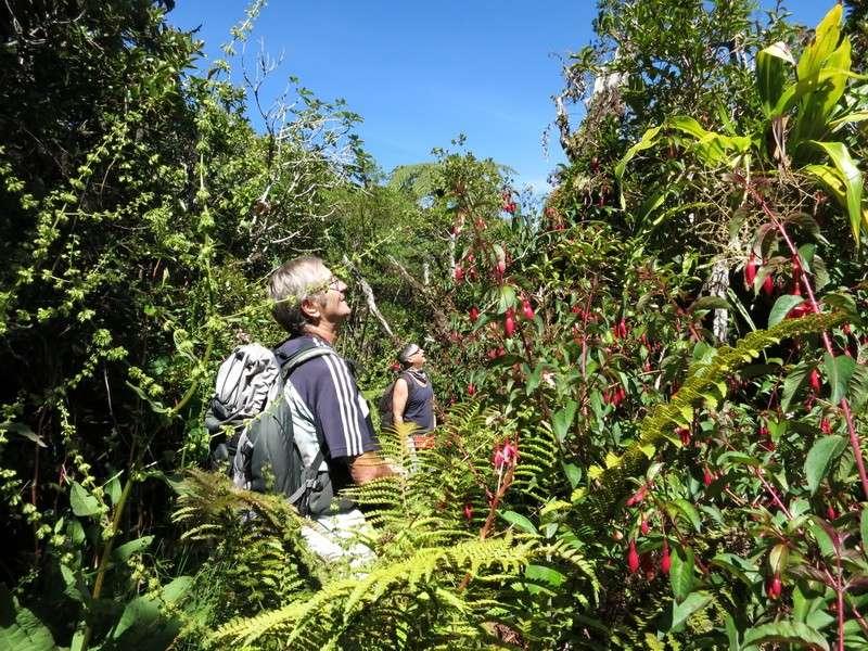 Troisième voyage à la Réunion 21_bra11