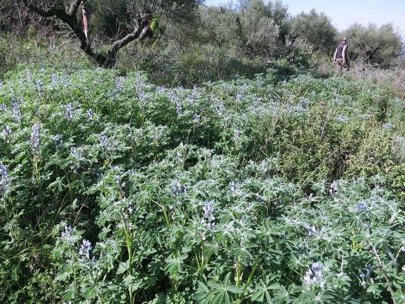 Le centre de la Crète du 3 au 6 avril 2014 2_lith10