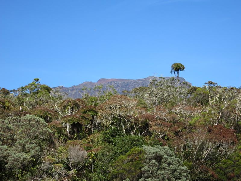 Troisième voyage à la Réunion 2_pito11