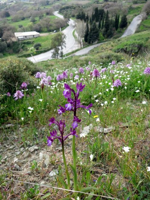 Le centre de la Crète du 3 au 6 avril 2014 34_vat10