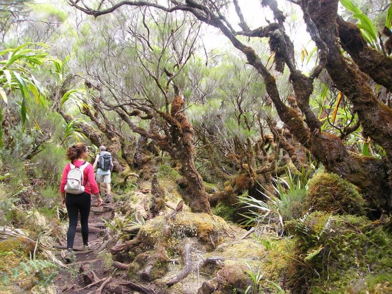 Troisième voyage à la Réunion 36_pit10