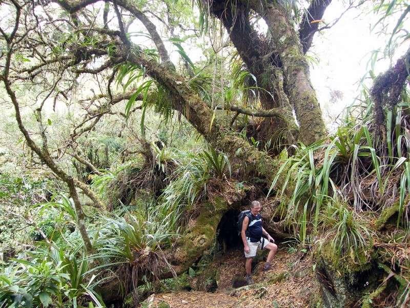Troisième voyage à la Réunion 37_pit10