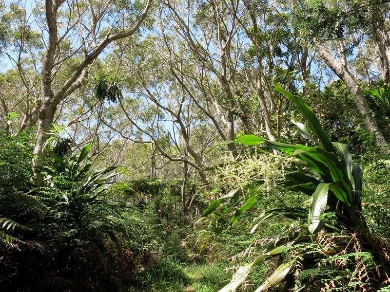 Troisième voyage à la Réunion 3_balo11