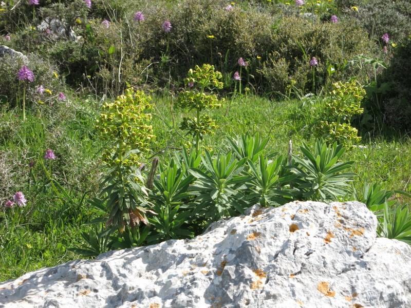 Le centre de la Crète du 3 au 6 avril 2014 42_eup10