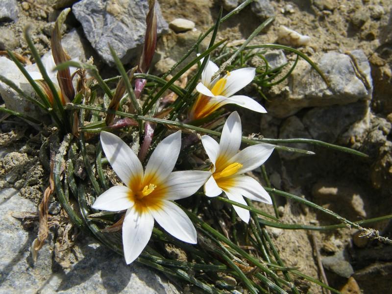 Le centre de la Crète du 3 au 6 avril 2014 43_rom10