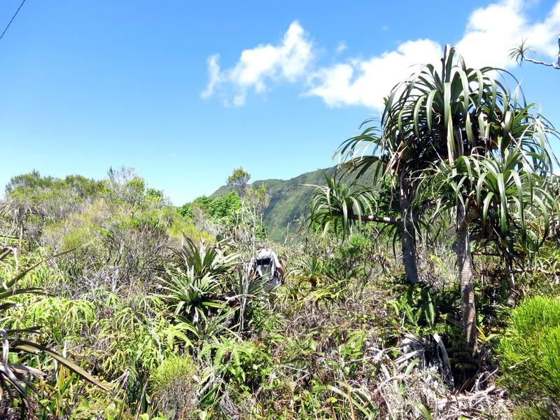 Troisième voyage à la Réunion 59_pan10
