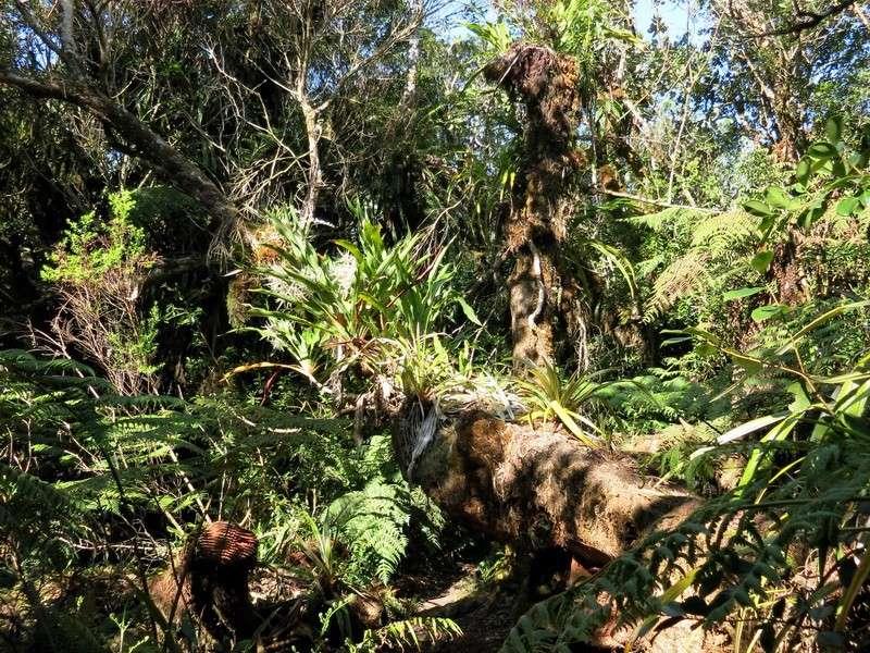 Troisième voyage à la Réunion 5_balo11