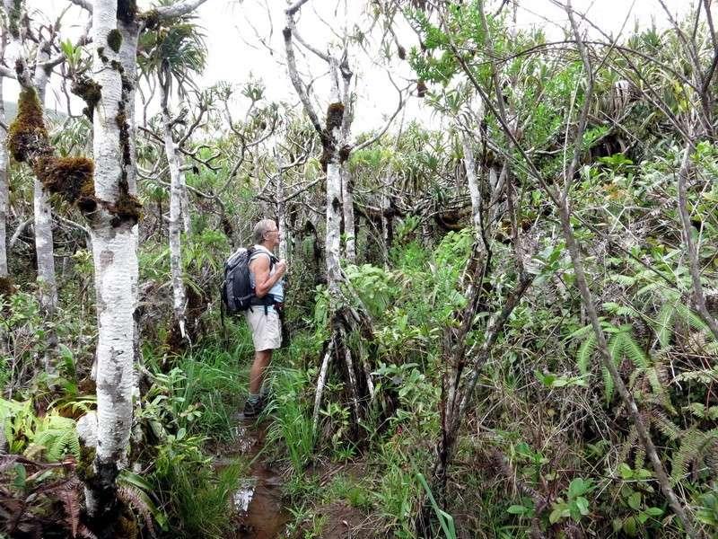 Troisième voyage à la Réunion 61_pan10