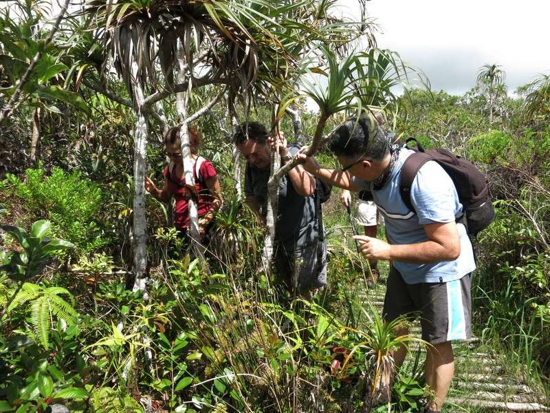 Troisième voyage à la Réunion 62_pan10