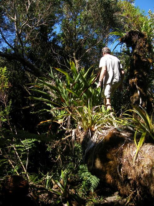 Troisième voyage à la Réunion 6_balo11