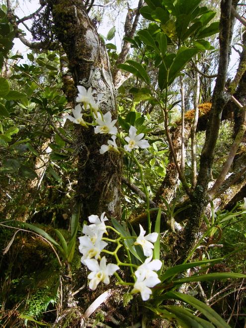 Troisième voyage à la Réunion 7_becl11
