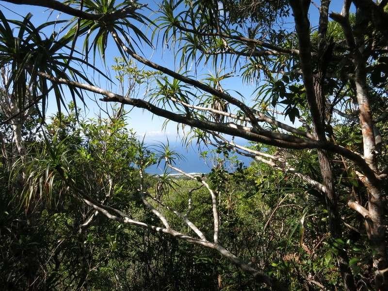 Troisième voyage à la Réunion 80_sud10