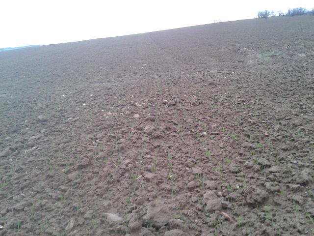 semis de blé 2013-2014 - Page 3 2014-035