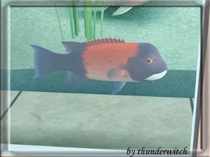 Все для аквариумов, водоемов Imag2210