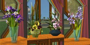 Цветы для дома Imag2294