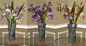 Цветы для дома Imag2351