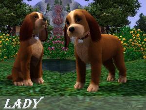 Собаки - Страница 5 Image631