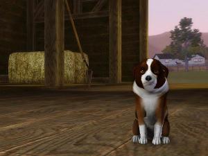 Собаки - Страница 6 Image701