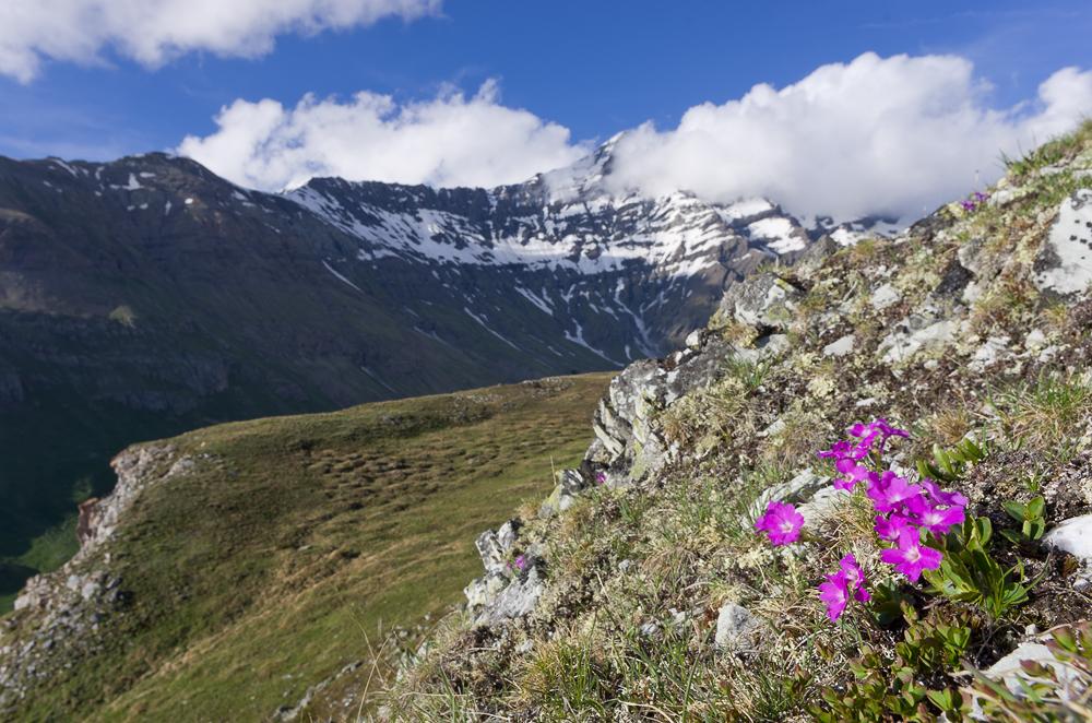 Un mois de juillet bien rempli en Vanoise Imgp0714