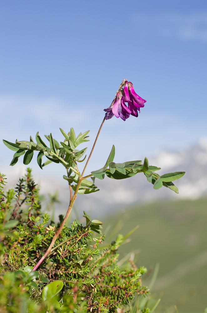 Un mois de juillet bien rempli en Vanoise Imgp2111