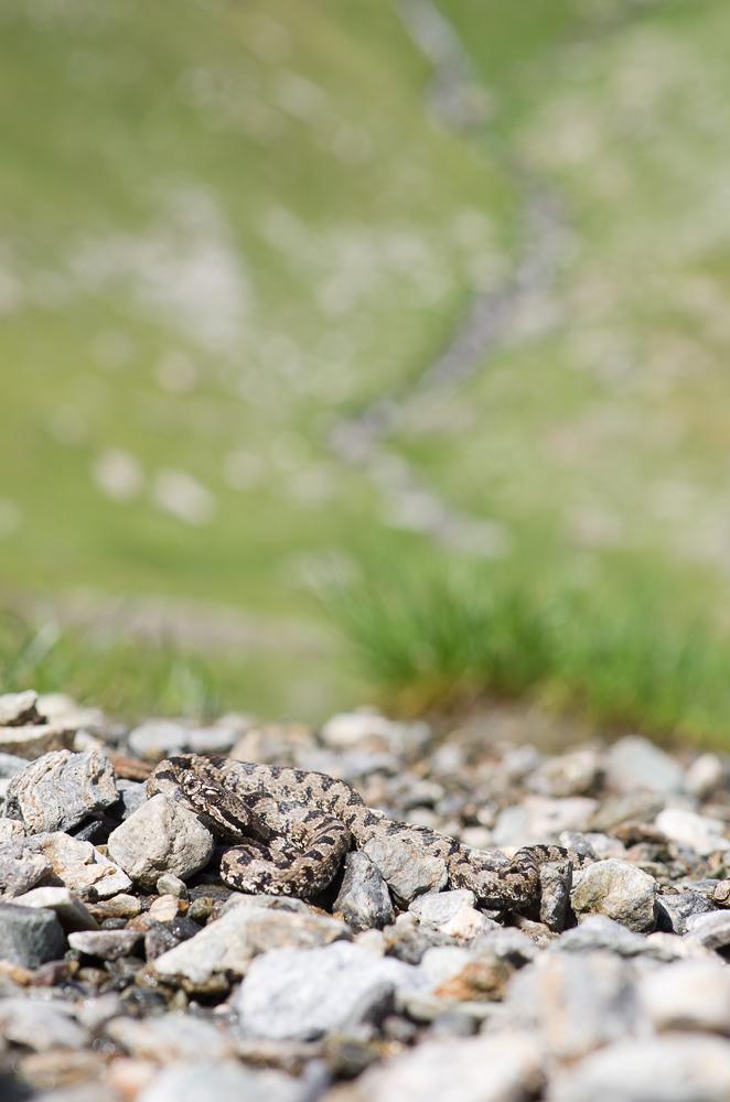 Un mois de juillet bien rempli en Vanoise Imgp2618