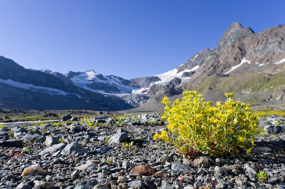 Août et début septembre dans les Alpes Imgp2917