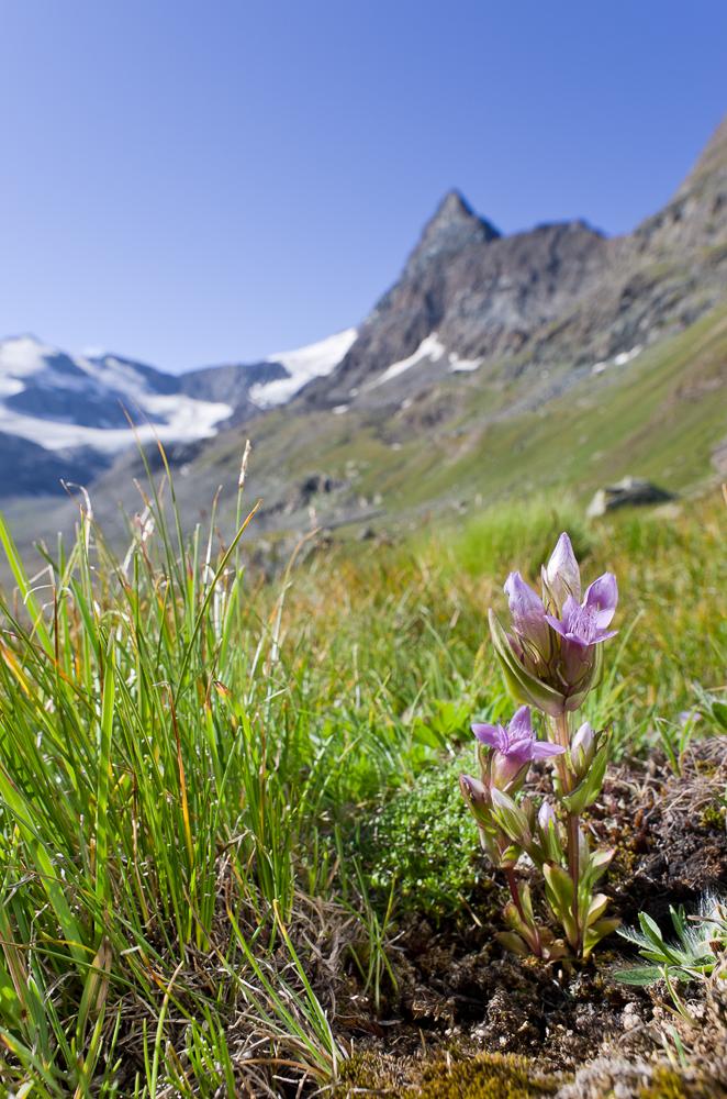 Août et début septembre dans les Alpes Imgp3012