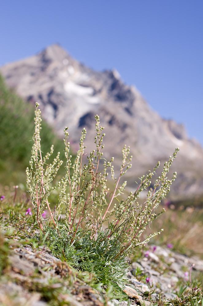 Août et début septembre dans les Alpes Imgp3312