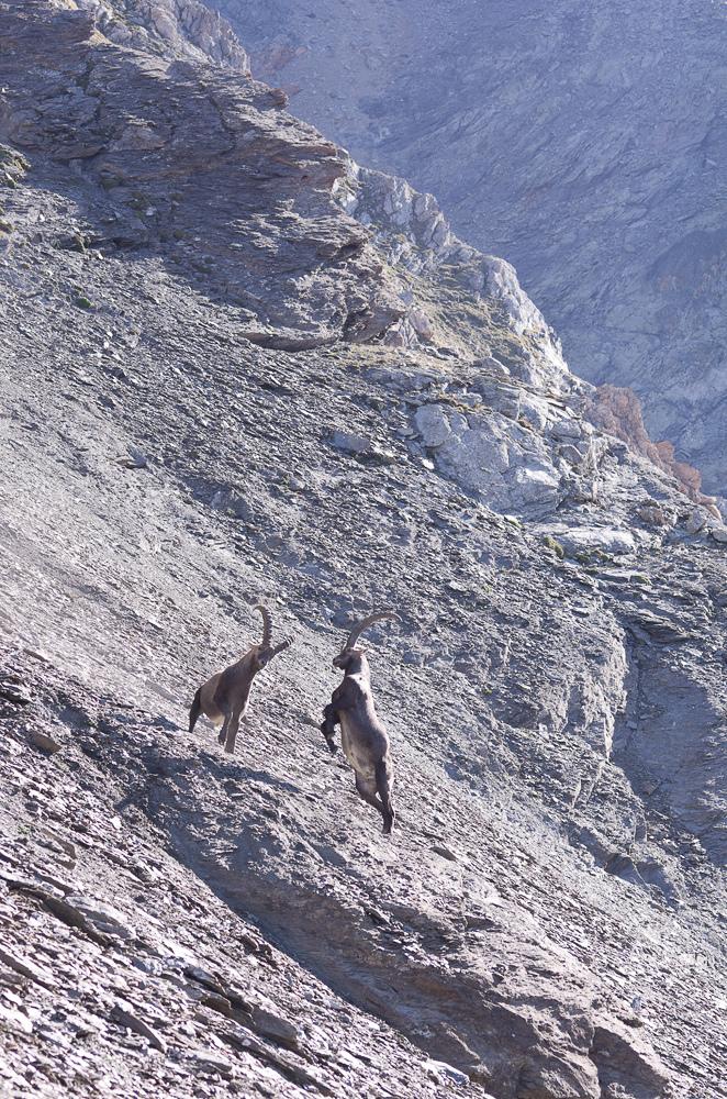 Août et début septembre dans les Alpes Imgp3510