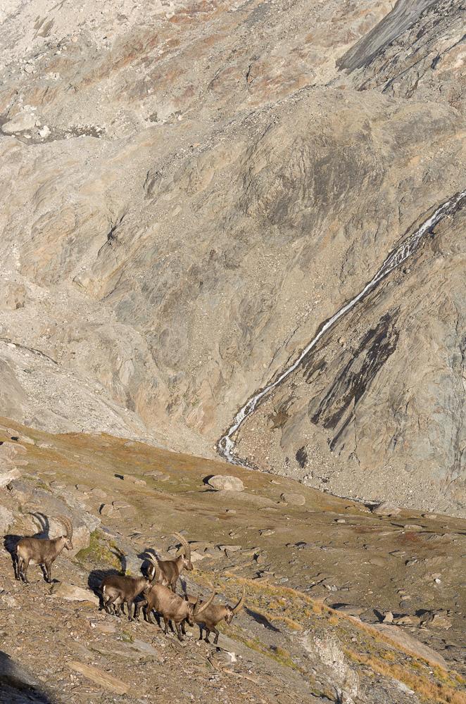 Août et début septembre dans les Alpes Imgp3812