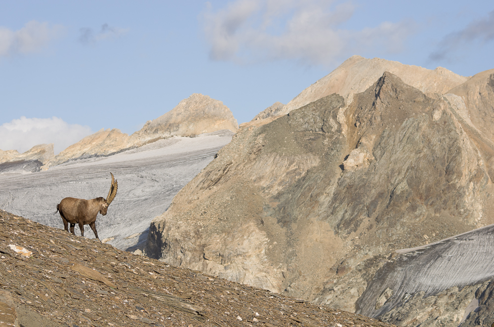 Août et début septembre dans les Alpes Imgp3813